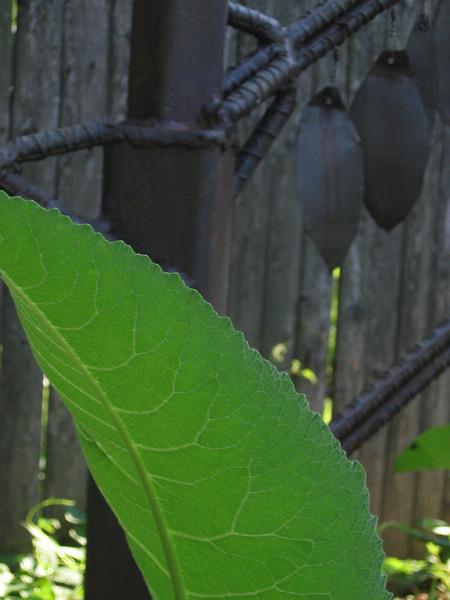Beautiful leaf, Maze Garden