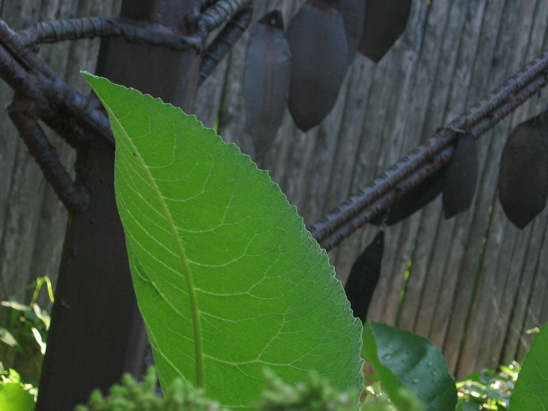 Leaf with leaves