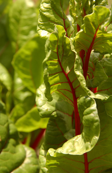 Dancing Swiss chard