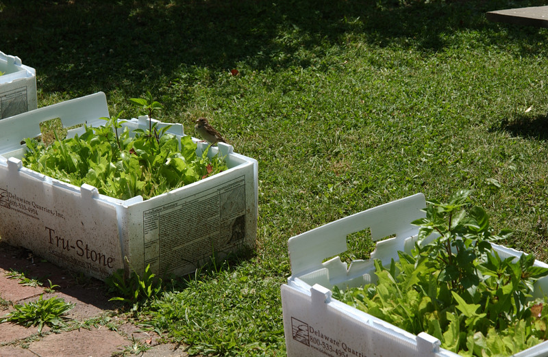 Sparrow friend comes to inspect the new plants