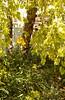 Daylilies under the river birch