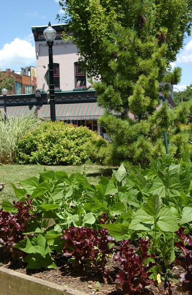 Maze Garden view, looking towards Third St.