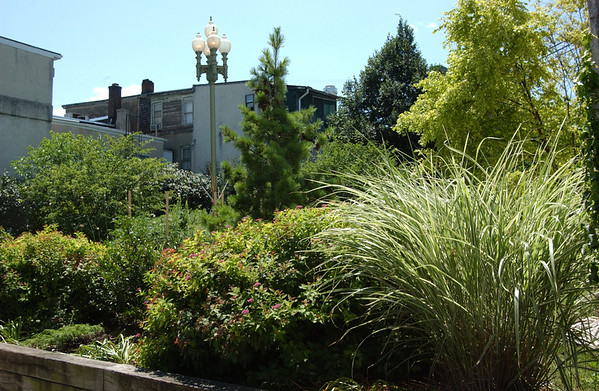 Front view of the Maze Garden