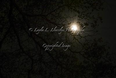 Day 63 Enchanting moonlight