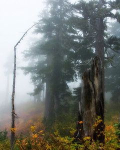 Misty Morn  Mt Baker National Forest, Washington