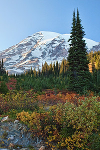 Here is the amazing thing about the Fall in the mountains- All the color is on the ground instead of the trees!!  Mt Rainier in Fall Washington