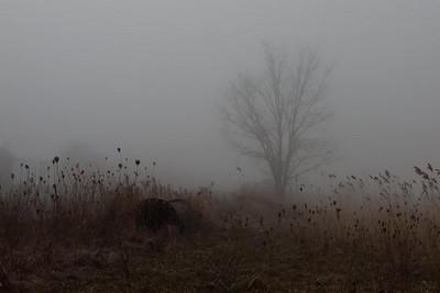 """Forgotten Place"""