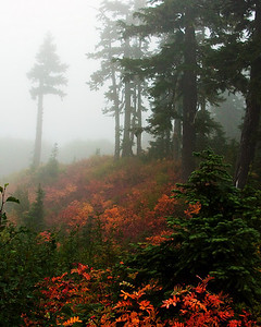Mt Baker National Forest, Washington