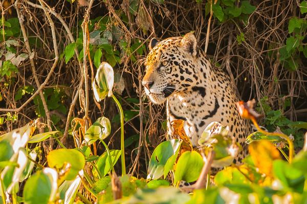 Pantanal 1-129