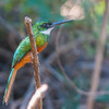 Pantanal 1-715