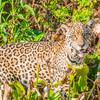 Pantanal 1-161