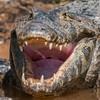 Pantanal 1-651