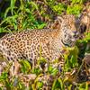 Pantanal 1-159