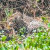 Pantanal 1-577