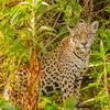 Pantanal 1-257