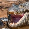 Pantanal 1-656