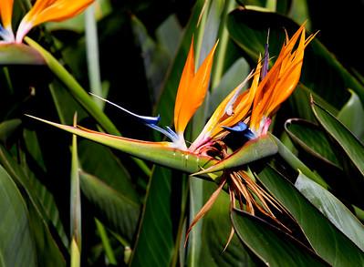 Bird of Paradise plant near the Zoo entrance.