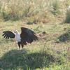 fish eagle just landed