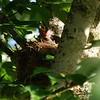 Baby birds at feeding time