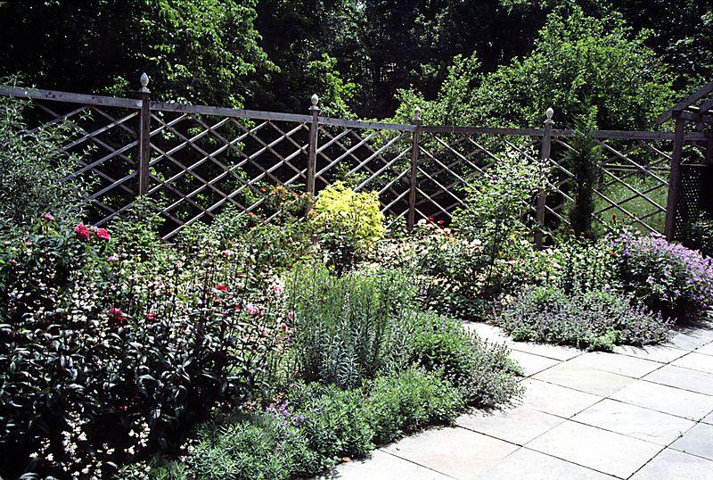 Secret garden looking southeast - roses, Penstemon Huskers Red Golden Elder, Nepeta, Geranium Johnsons Blue.