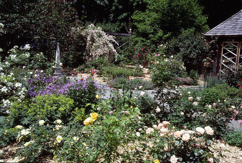 Secret garden looking over the southeast quadrant and the yellow  (Topaz Jewel, Graham Thomas) and blush roses (Buff Beauty) there, and also Alchemilla Mollis, Geranium Johnson's Blue, Lychnis Calcedonia.