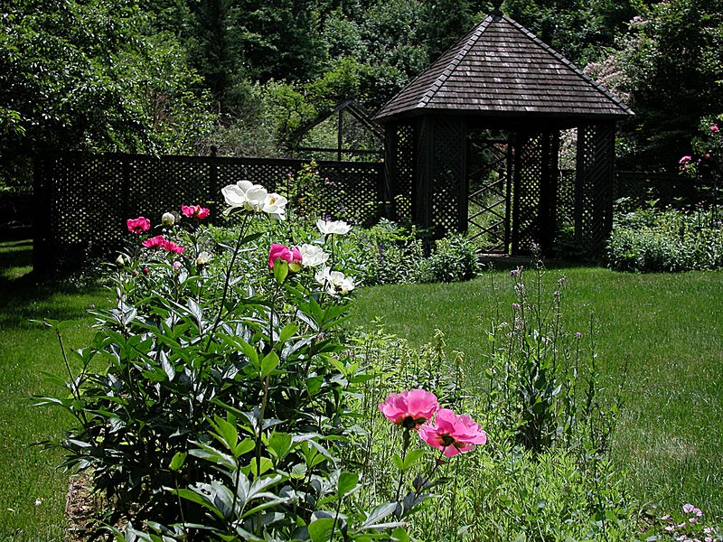 The eastern long border when peonies are in full bloom.