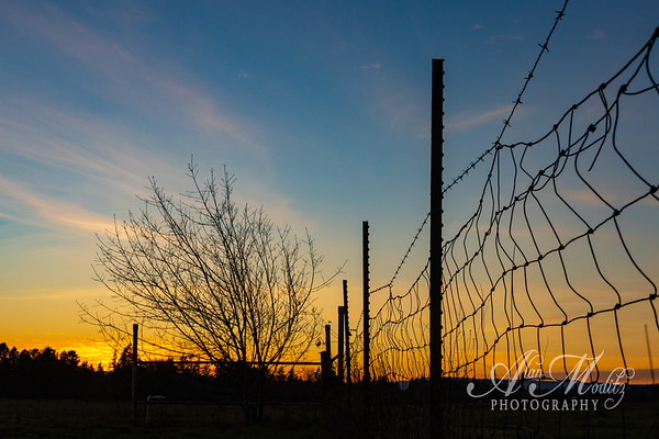 tree, fence and sunset