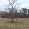 The Tree Day Three