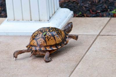 Herbie's got 'er headed now!