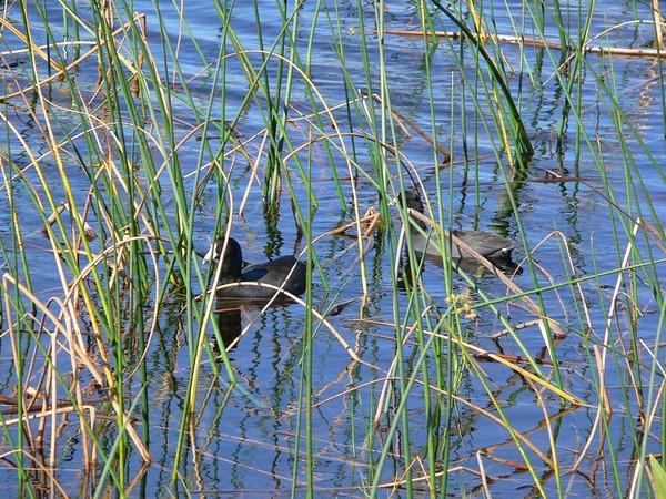 The Viera Wet Lands 10/26/2008