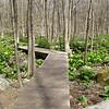 raised walkway through the wetlands area in the woods