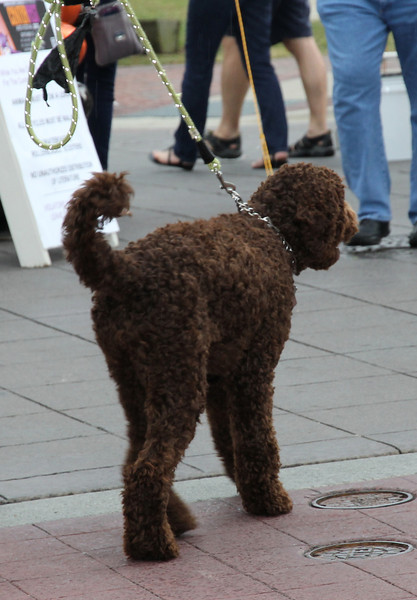 this dog looked like a teddy bear