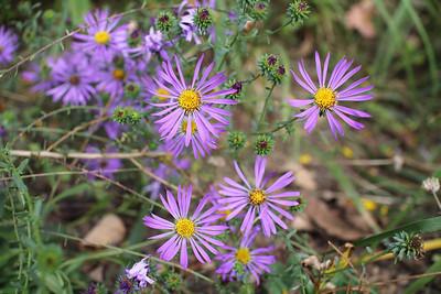 NC Botanical Gardens