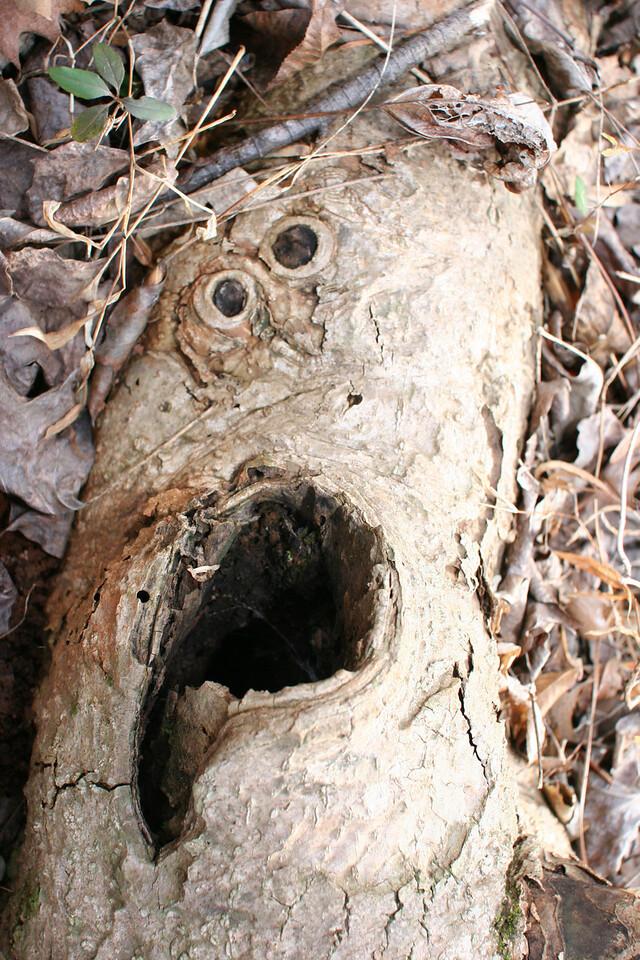 scary tree truck