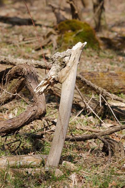 a stumpy creature
