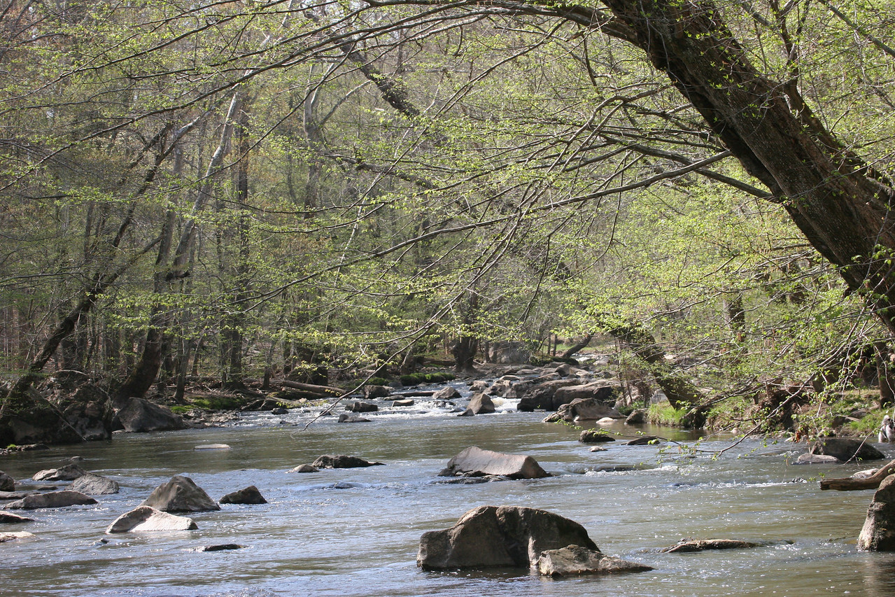 View up the Eno River - Durham, NC