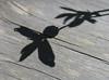 Flower shadow; Yosemte