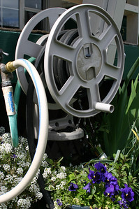 The patchy alleged lawn is not the only project in the yard, oh no. There is also the hose reel that leaks. Into the dog bowl (cleverly mostly hidden by a pansy). See, everything has dog stuff in it.