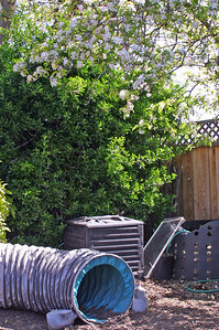 But the dog thing is ubiquitous. Say I want to take a lovely photo of the apple tree in all its fine spring plumage. Nope: Dog agility stuff. (Plus bonus compost bins. Good for dogs to stand on, dig in for gophers, and eat stuff from for later vomitage on handy carpeting.)