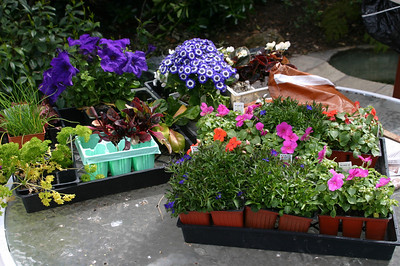 I have many many flowers that I want to plant in many many pots. Just looking at this reminds me that I have many many dogs and that I cannot have a normal flower bed like--normal.  So much to do, so little time!