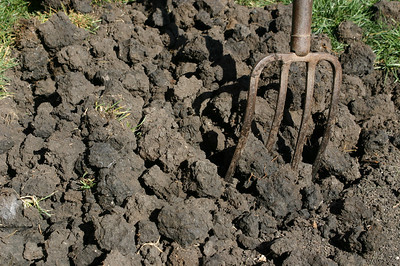 So--back to the soil. In fact the clay soil has many many useful nutrients that go beyond what the bizarre dogs absorb when they bizarrely snack on some. It just needs organic matter added to release the nutrioids from their cruel imprisonment.
