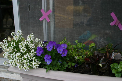 So I plant flowers in pots all over the yard. But if I try to take a photo, I see the little markers that I put on the screen door to prevent dogs from attempting to run through it at 33 miles per hour on an emergency squirrel mission.