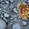 001DSC_4891 Rialto Beach