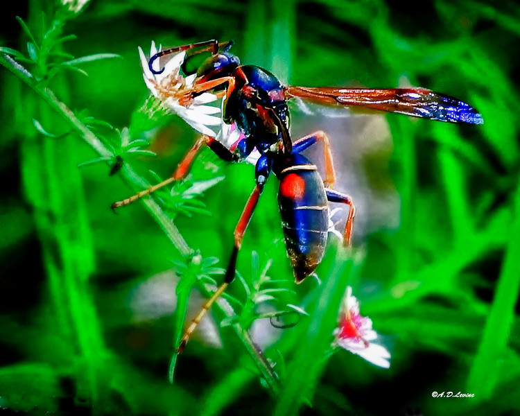 paper wasp a