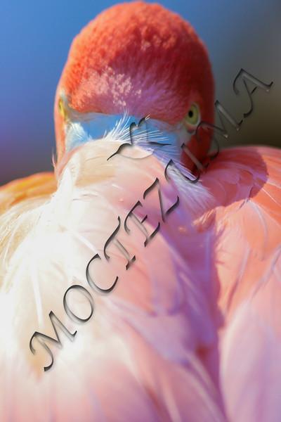 Angry flamingo?