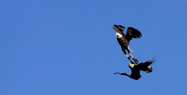 eagle grasp