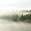 Misty forest coastline