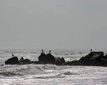 Seagulls in Long Beach,NY.