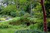 Pond at Clark Gardens.