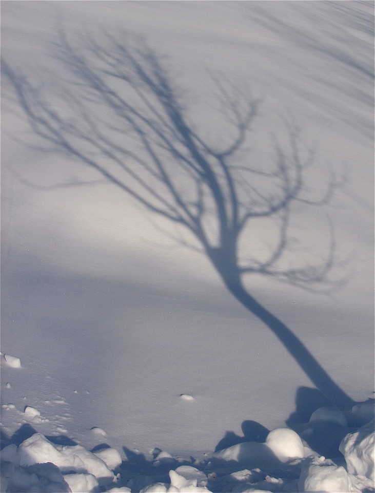 Tree shadow on deep fresh snow